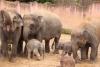 Zwei Elefantenbabys in 24 Stunden